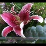 Imaginate Studio Portfolio - Commercial (Willow & Wildflowers)